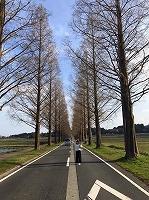 metesekoia.jpg